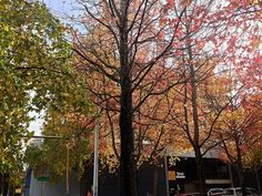 2014 YIP - Day 306: Autumn. Seriously.
