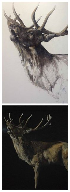 Stag art by Tony O'Connor whitetreestudio.ie