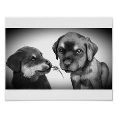 Best of friends poster - dog puppy dogs doggy pup hound love pet best friend