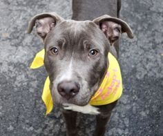 SPARTA- A1052813 9/10 MNTHS OLD BABY BOY! 2 B KILLED 2NIGHT 10/5/15 OR EARLY 2MORROW MORNIN! TERRIFIED, HEARTBROKEN N FEELIN COMPLETELY ABANDONED, ALL ALONE SCARED N DUMPED HERE 2 B KILLED! WE R SHY ADORABLE LIL SPARTA'S ONLY VOICE N HOPE 4 SURVIVAL OUT OF HERE, ALIVE! WONT U PLZ HELP MAKE THIS GORGEOUS BABYS LAST WISHES COME TRUE? LOVE, LIFE N A 4EVER HOME:) DONT WAIT, THIS HORRID PLACE KILLS DOGS EVERYDAY! HURRY NO TIME! CHOOSE LIFE, NOT DEATH! P ADOPT!