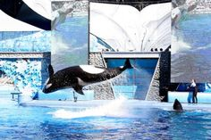 'Science Over Spectacle': Support for Anti-SeaWorld Bill Goes Viral
