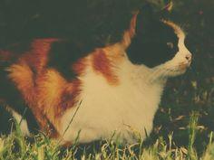 A beautiful cat!