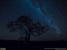 Лучшие снимки с фотоконкурса National Geographic Nature Photographer 2016