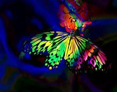 Rainbow Neon Butterfly by Lloyd K. Rainbow Butterfly, Rainbow Flowers, Butterfly Kisses, Butterfly Art, Rainbow Colors, Butterfly Colors, Mariposa Butterfly, Rainbow Things, Rainbow Stuff