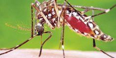 Zika, amenaza de daño cerebral en bebés