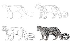 How to Draw Big Cats: Lions, Tigers, Cheetahs, and More — Everything you need to know to draw mountain lions, leopards, jaguars, lions, tigers, snow leopards, and cheetahs. Everything.
