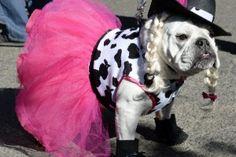 Desfile nos EUA reúne cachorros fantasiados para Halloween - BOL Fotos - BOL Fotos