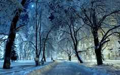 Rostov-on-Don, Russia: Winter in the Park