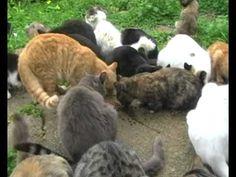 su pallosu deputato in visita alla colonia felina firma per su pallosu patrimonio unesco