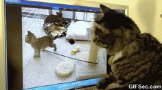 Cat and Computer GIF - www.gifsec.com