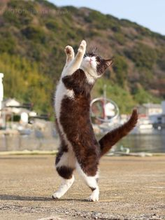 久方 広之 新作「のら猫拳キッズ」予約(@sakata_77)さん | Twitter