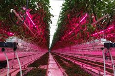 The high use of LED grow lights indoor vertical farm costshttp://www.eneltec-led.com/news/the-high-use-of-led-grow-lights-indoor-vertical-farm-costs.html