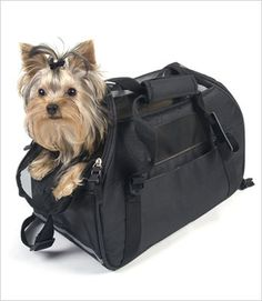 Bergan Comfort Pet Carriers from g w little website under $40 Airline Pet Carrier, Pet Carriers, Yorkie, Website, Pets, Animals And Pets, Yorkshire Terrier, Yorkshire Terriers