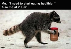If you are feeling sad during the afternoon, this daily afternoon funny picdump 39 will change your mood. Check out 20 hilarious pictures that will make you happy. Animals And Pets, Funny Animals, Cute Animals, Funny Raccoons, Dc Memes, Funny Memes, Cute Raccoon, Baby Racoon, Morning Humor