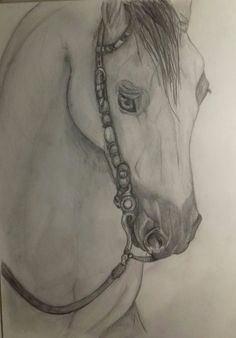 Horse drawing I made My Arts, Horses, Drawings, Sketches, Drawing, Portrait, Horse, Draw, Grimm