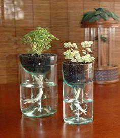 Wine Bottle Plant Starter