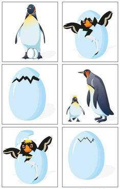 Period The pack ice, the Antarctic, the cold and the winter. Winter Activities, Kindergarten Activities, Winter Thema, Artic Animals, Penguins And Polar Bears, Polo Norte, Sequencing Cards, Penguin Craft, Winter Kids