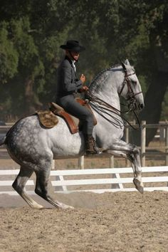 "Grey Lusitano stallion Oxidado in Portugal.  You must go on YouTube and watch the videos of this horse competing at the Portugese ""Trail"" classes...AMAZING!"