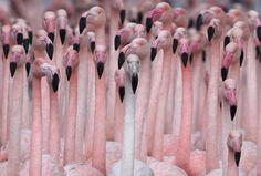 a yard full of pink flamingos .