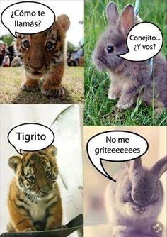 Tigrito