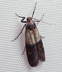 How to get rid of pantry moths and other pesky bugs