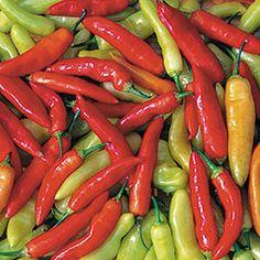 Pepper, Aji Cristal   Seed Savers Exchange