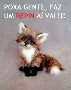 Beta faz #Repin