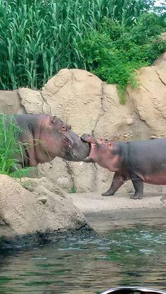 Fiona et Bibi 160618