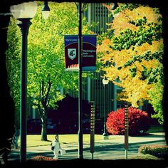 Fall on Campus.  #WSUAdmissions #gocougs