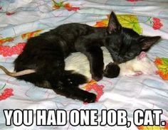 One Job Cat - You Had One Job Meme