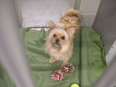 Worcester Animal Rescue League October 14 ·    This dog was named Lacey by the Good Samaritan that found her and brought her to the shelter today. She was found on 10/12/2015 in Lowell, Ma at a Stop and Shop. If she looks familiar to you, please call the shelter with additional information.