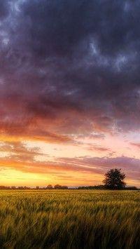 Rzepakowe pole - Tapeta na telefon Barbados, Clouds, Wallpapers, Celestial, Sunset, Nature, Outdoor, Paper, Photos