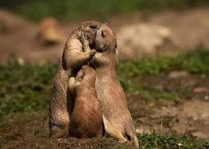 Beautiful Photographs of Adorable Animals Kissing Their Soulmates Animals Kissing, Baby Animals, Funny Animals, Cute Animals, Wild Animals, Mundo Animal, Hamsters, Cute Animal Pictures, Fauna