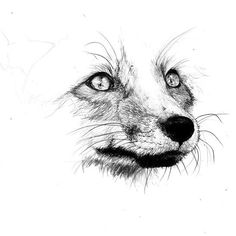 Tattoo Animal Small Red Fox Ideas For 2019 Pencil Art Drawings, Easy Drawings, Drawing Sketches, Animal Sketches, Animal Drawings, Wolf Drawings, Imagen Natural, Fox Sketch, Fuchs Tattoo