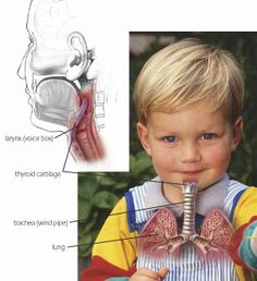 Essential Oils  for Croup