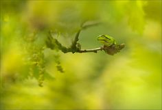 Nature's Emerald by Tammy Bergstrom.