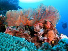 Reef Diving by Nanuya Island Resort, via Flickr