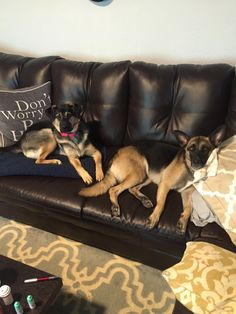 Rescues are the best right? Stormie & Hope http://ift.tt/2blb4Gy