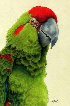 28 Ideas De Animales Animales Pinturas De Animales Dibujos De Animales