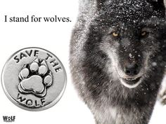 #standforwolves