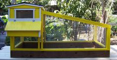 Quail Coop Yellow | PaulsRarePoultry