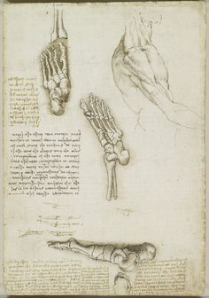 Recto: The bones of the foot. Verso: The bones and muscles of the arm | Royal Collection Trust