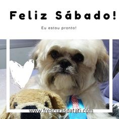 Feliz Sábado! #frescurasdatati #felizsabado #euguardoosábado #shitzu #Faro #filhode4patas