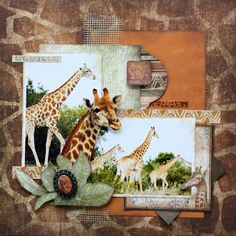 Bo Bunny - Zoology Collection Scrapbook layout Zoology @Melissa Squires Squires Squires Kennedy #bobunny #Scrapbooking