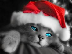 Cat with the Christmas hat