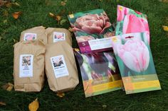 Lökar 2015 Tulipa 'Salmon Impression' Tulipa 'Sanne' Tulipa 'Sweet Love' Tulipa 'Light and Dreamy' Tulipa 'La Belle Epoque' Tulipa ' Havran' Tulipa 'Foxtrot' Tulipa 'Pink Impression'