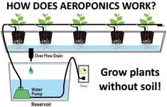 grow plants without soil                                                                                                                                                                                 More
