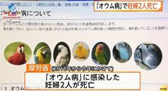 Doença transmitida por aves de estimação causa a morte de gestantes. Veja mais.