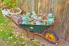 planting succulents in a wheelbarrow - : Yahoo Image Search Results