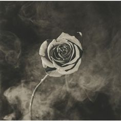 Robert Mapplethorpe, rose (with smoke)